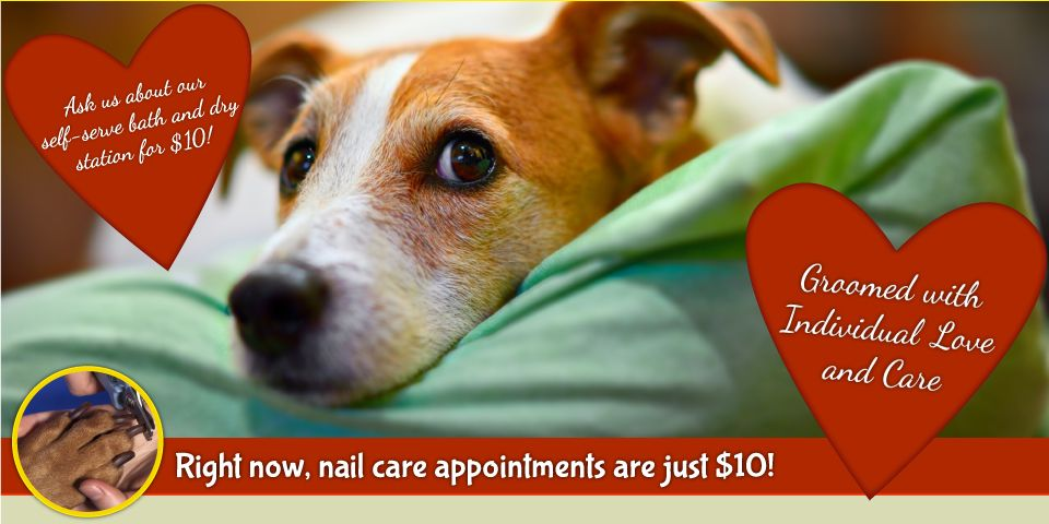Groomed with Individual Love and Care | Right now, nail care appointments are just $7.50! Dog on a blanket